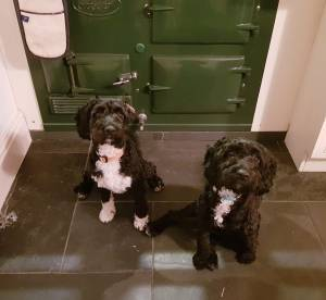 Two puppy dogs sit in front of an Aga at Treglisson Guest house